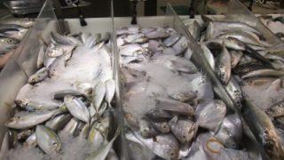 マレーシアで自炊  魚料理お助けアイテム  圧力鍋で作る煮付け  フライパンで焼く魚  DolyFileetで美味しく魚ソテー  ダルカレー 豆カレー グリーンカレー