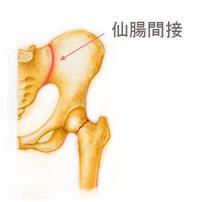 骨盤 仙腸関節