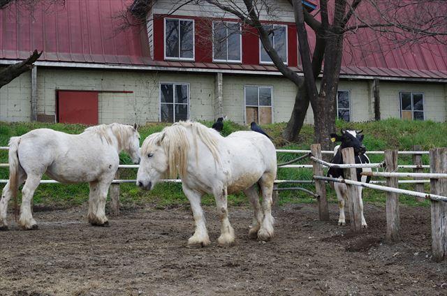 服部牧場 馬