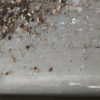 黒アリが集まるところにできる木くずのような・・得体の知れない物体は何!? おすすめナメクジ駆除剤