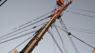 電線に並んだ鳥が一直線に 仲睦まじく・・・
